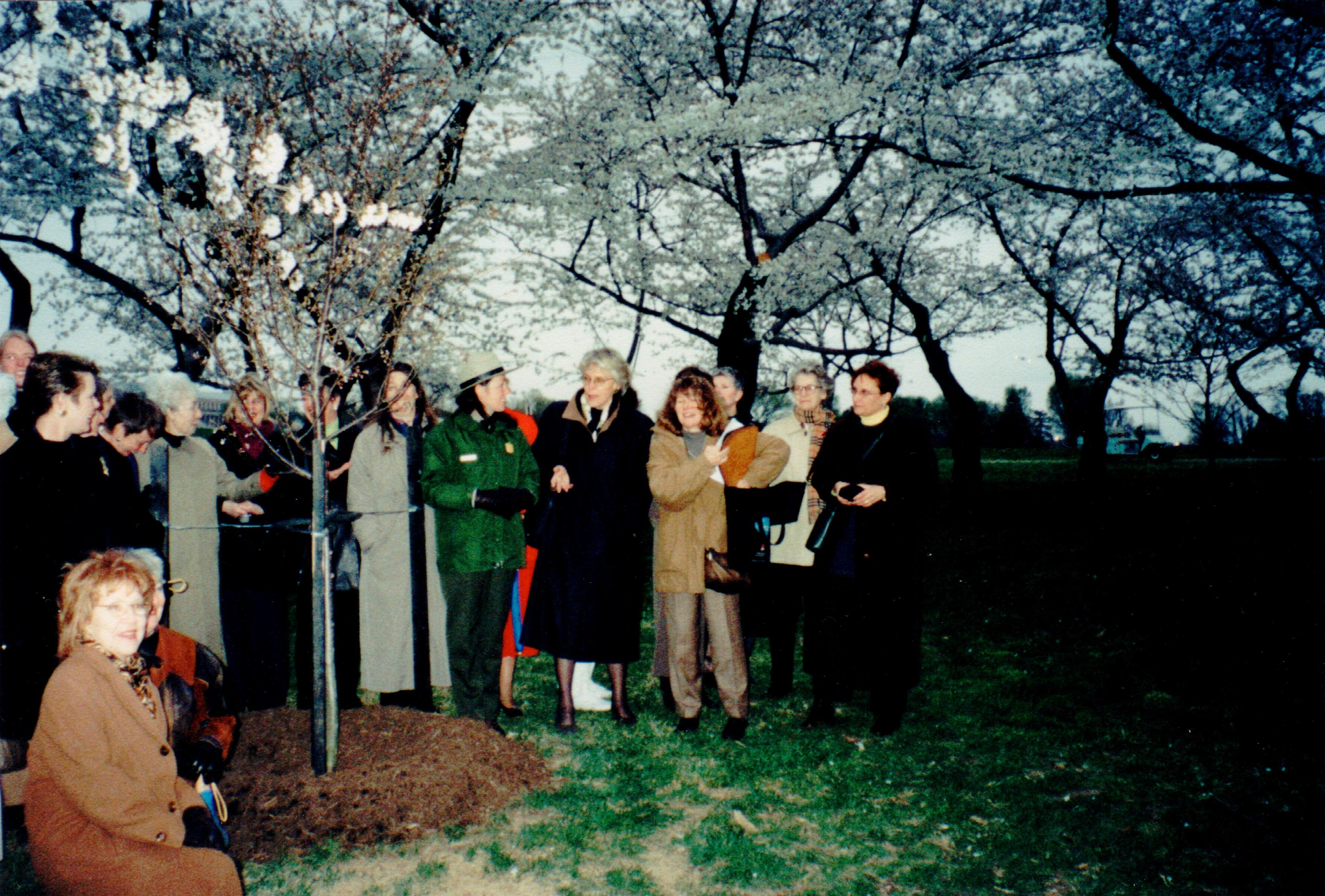 Planting cherry tree in Washington DC 2001 cropped